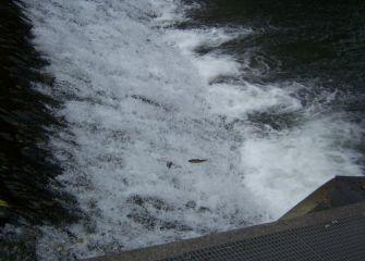 Escalera para peces