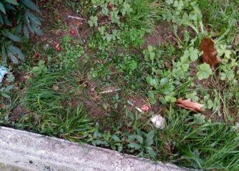 Jeringuillas en los jardines