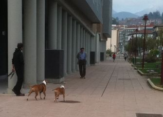 """Perros peligrosos """"a su aire"""""""