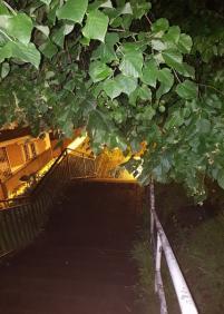 Selva virgen en barrio de vista alegre
