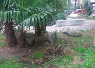 Palmera caída en plaza de la calle Rentería de Donostia