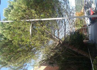Peligro: árbol