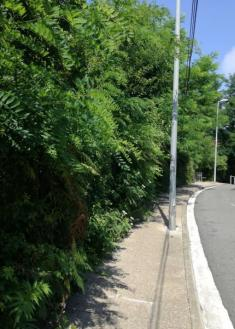 Selva en Marrutxipi