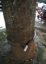 El árbol es el ahorcado
