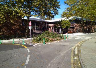 Árbol cortado a la puerta del colegio