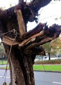 Peligrosa situación de una rama desglarrada de un árbol a la entrada de un parvulario