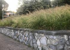 Donostia descuida sus jardines