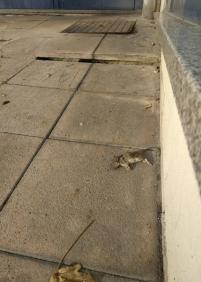 rompe-tobillos y ratas